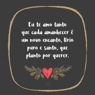 Frase de Amor - Eu te amo tanto que cada amanhecer é um novo encanto, lírio puro e santo, que planto por querer.
