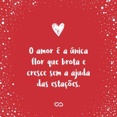 Frase de Amor - O amor é a única flor que brota e cresce sem a ajuda das estações.