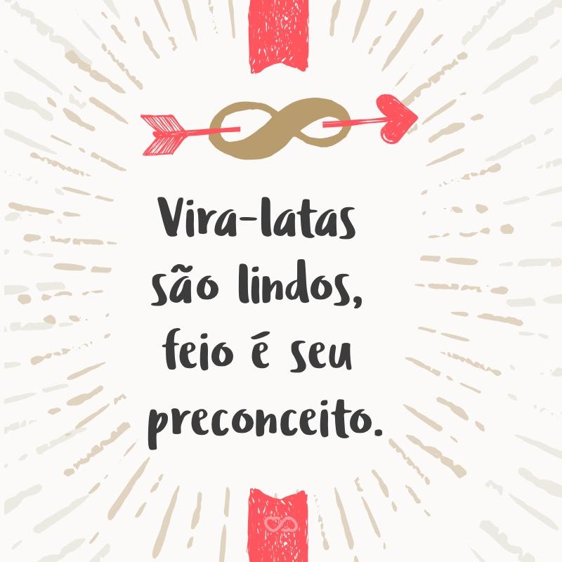 Frase de Amor - Vira-latas são lindos, feio é seu preconceito.
