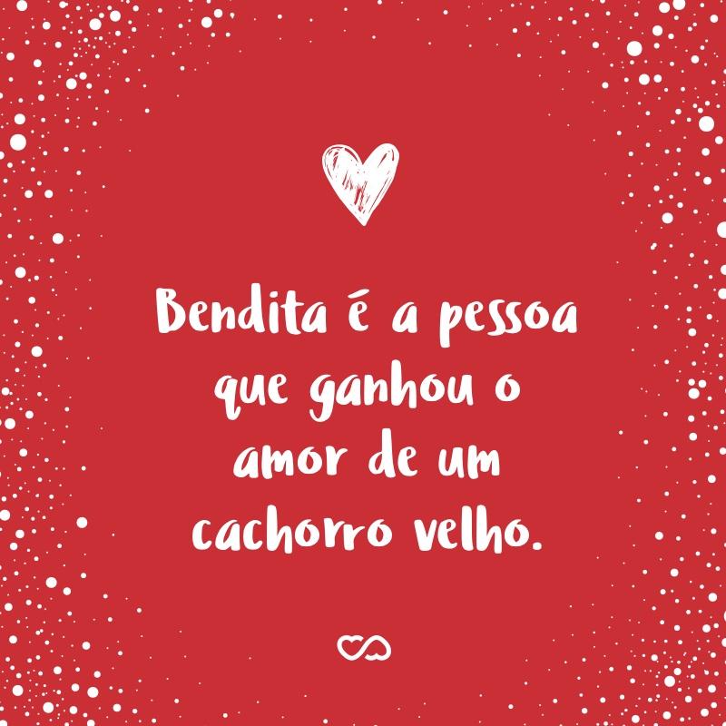Frase de Amor - Bendita é a pessoa que ganhou o amor de um cachorro velho.