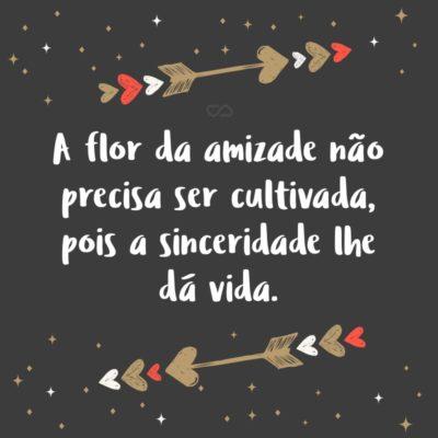 Frase de Amor - A flor da amizade não precisa ser cultivada, pois a sinceridade lhe dá vida.