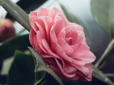 50 frases românticas de bom dia para já acordar apaixonado
