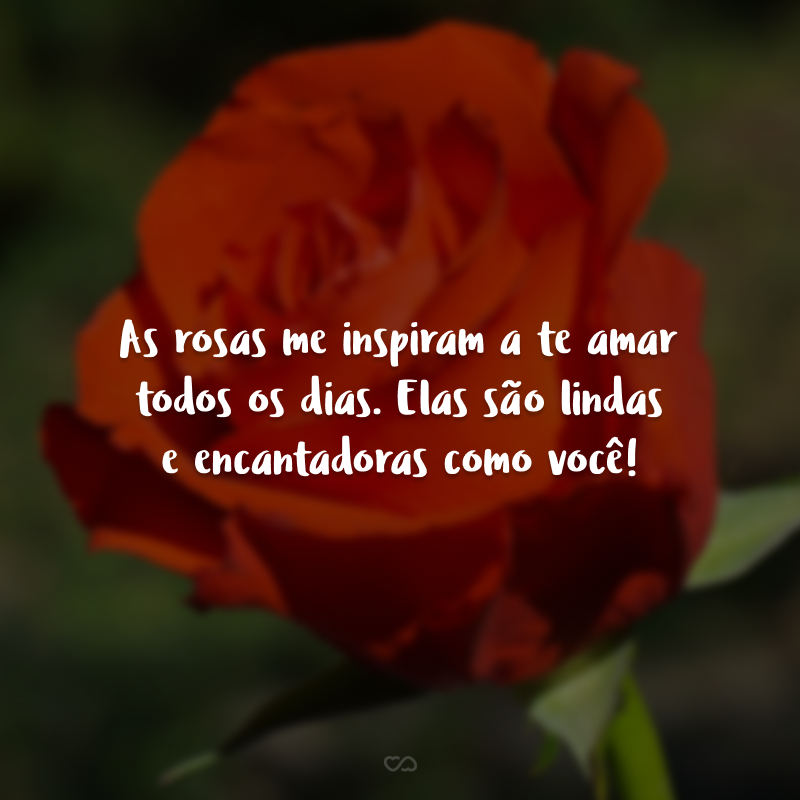 As rosas me inspiram a te amar todos os dias. Elas são lindas e encantadoras como você!