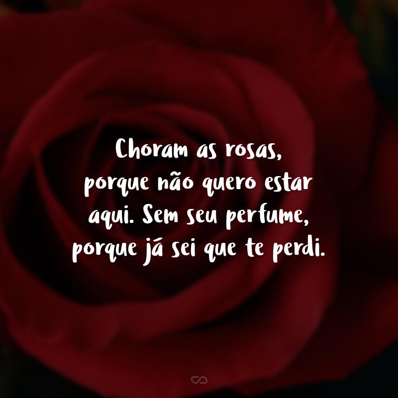 Choram as rosas, porque não quero estar aqui. Sem seu perfume, porque já sei que te perdi.