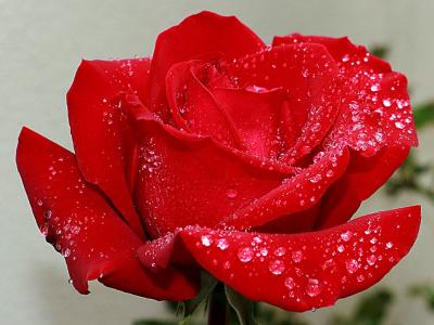 40 frases sobre rosas que vão te inspirar com esse símbolo do amor