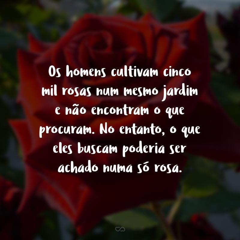 Os homens cultivam cinco mil rosas num mesmo jardim e não encontram o que procuram. No entanto, o que eles buscam poderia ser achado numa só rosa.