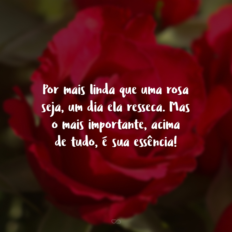 Por mais linda que uma rosa seja, um dia ela resseca. Mas o mais importante, acima de tudo, é sua essência!